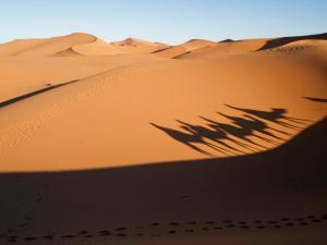 Into the Sahara
