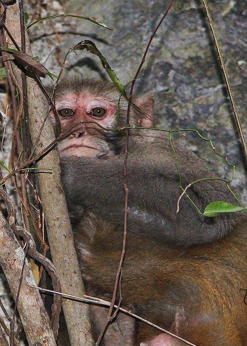 monkey at halong bay
