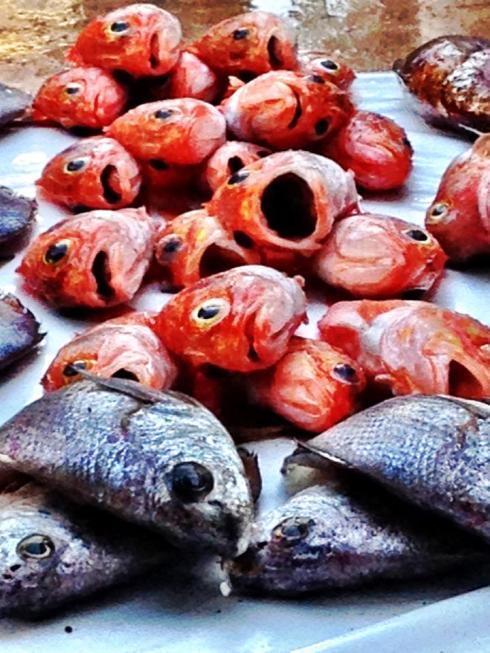 Fish market in Essaouira, Morocco.