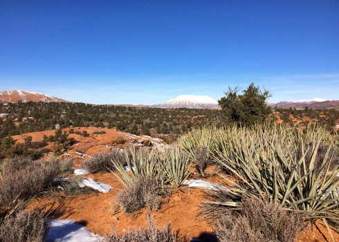 I found it interesting to see cactus and snow existing together. I never pictured the desert with snow.
